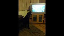 dog likes coronation street theme tune