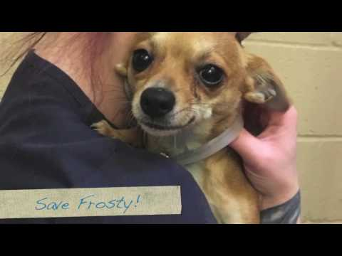 Please Help Save Frosty! 1 yr. Shelter Little Dog ASAP!