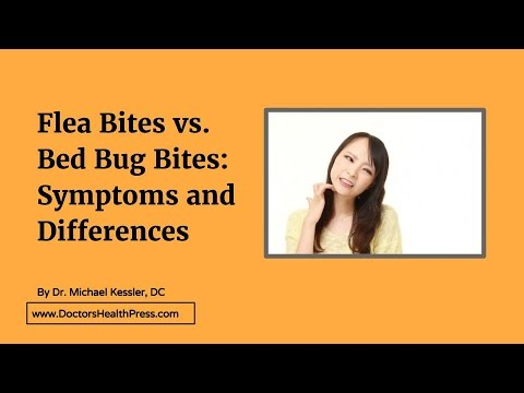 Flea Bites Vs Bed Bug Bites Symptoms And Differences Doctors