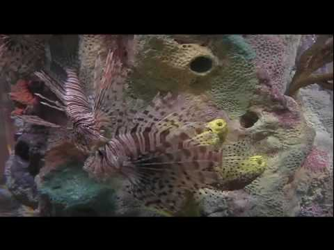 Whole Foods Begins Selling Lionfish