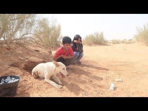 رحنا لكلب عماد- وحصلناه عطشان thumbnail