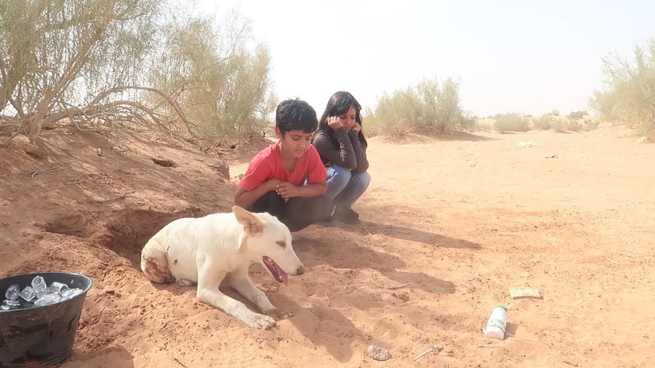 رحنا لكلب عماد- وحصلناه عطشان - YouTube