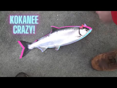 Kokanee Crazy On Lake Roosevelt - Planer Boarding!