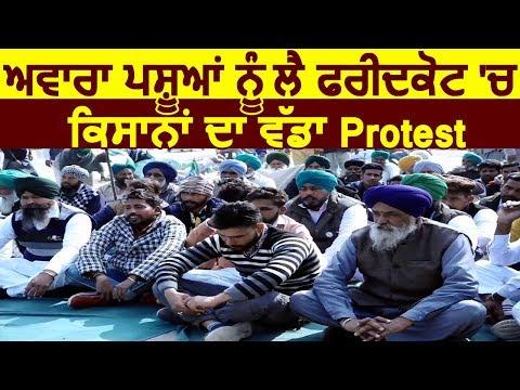 Exclusive: आवारा पशुओं को लेकर Faridkot में किसानों का बड़ा Protest