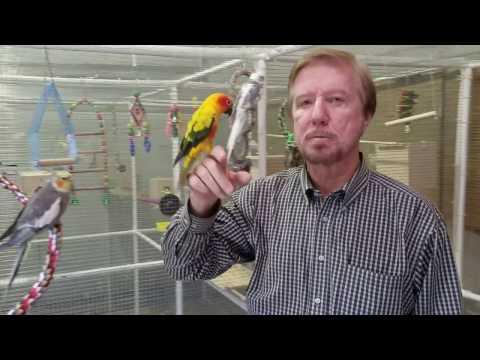 EZ Cage Walk-In Bird Aviary Video Tour
