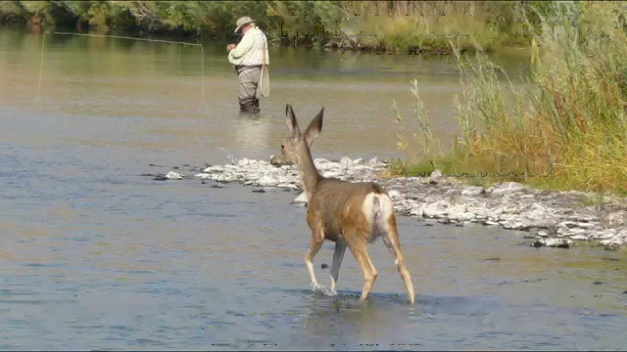 Fly fishing in usa 2015 pisode 2 les rivi res for Fly fish usa