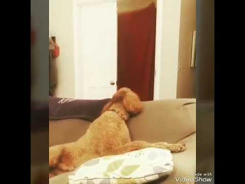 köpek ve kedi trollemek çok komikler