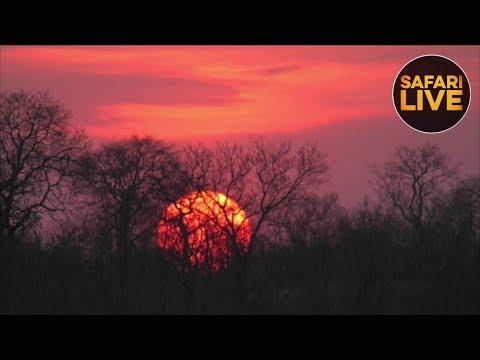 safariLIVE - Sunset Safari - September 17, 2018