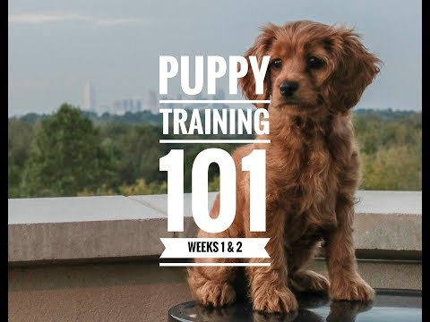 Puppy Training 101: Week 1 & 2