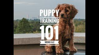 Puppy Training 101: Week 1 & 2