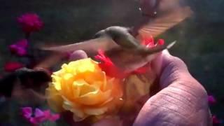 Hummingbird Don't Fly Away Seals & Crofts