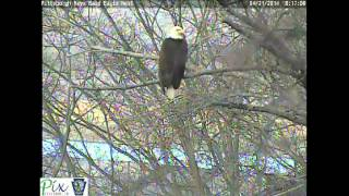 Panning the Hays bald eagle camera on 4/21/2014