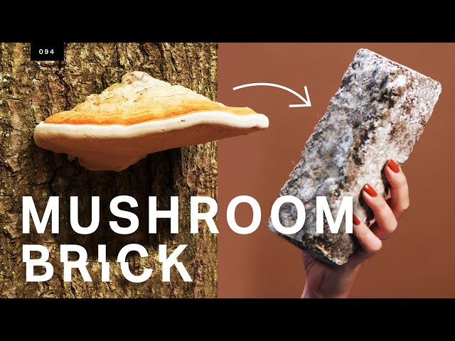 This mushroom brick could replace concrete