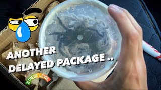 Tarantula Unboxing ~ ANOTHER DELAYED tarantula package, but this time …