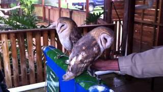 SO CUTE - OWLS DANCING TO ELVIS :)