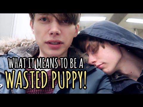 Wasted Puppy! | Gay Couple VLOG