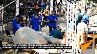 Слону Гранду в Тбилиси сделали операцию по удалению бивня