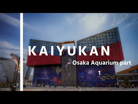 Osaka Aquarium Kaiyukan Part 1