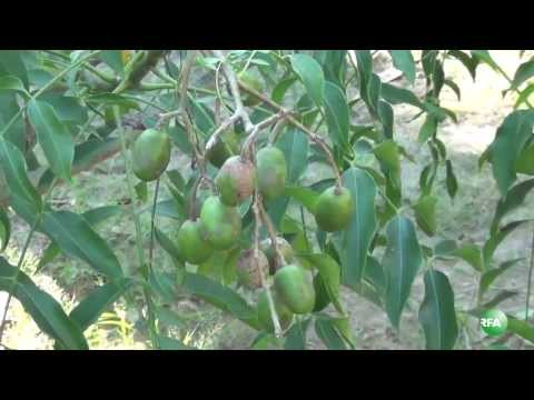 Organic Farming in Myanmar