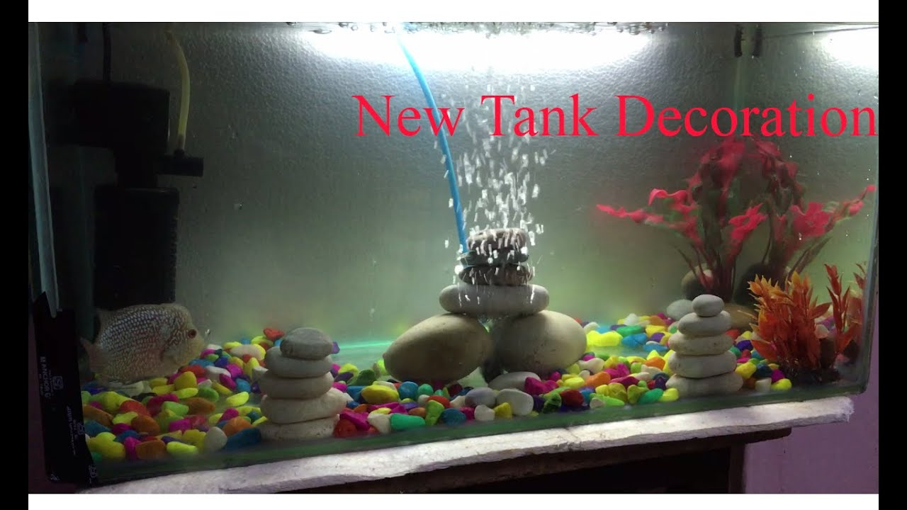 Flowerhorn Fish Tank Decoration | www.pixshark.com ...