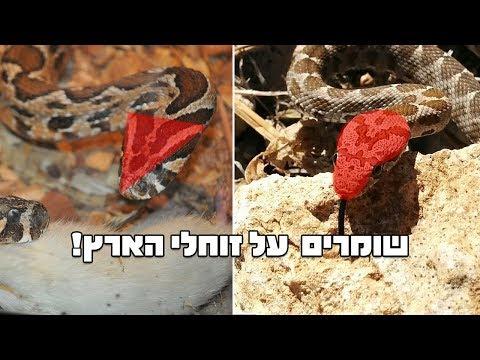 שומרים על זוחלי ארץ ישראל, תופעת ההתחזות-מימיקריה