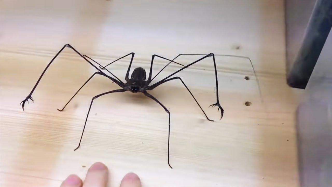 Download deadly spider bites me..