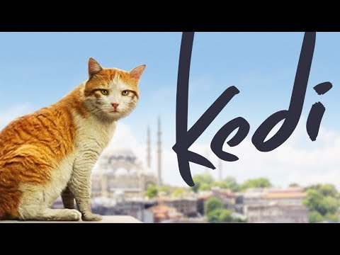 Kedi  Full Length Documentary