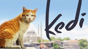 Kedi - Full Length Documentary