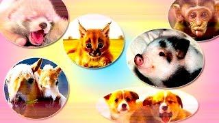 Детеныши животных, которые обязательно растопят сердце каждого, кто их увидит