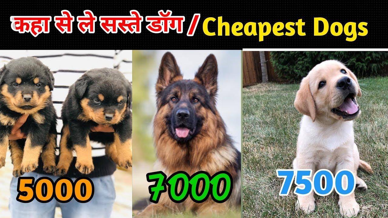 सस त ड ग कह स ल Cheapest Dogs Market In India कम Price व ल Puppy Youtube