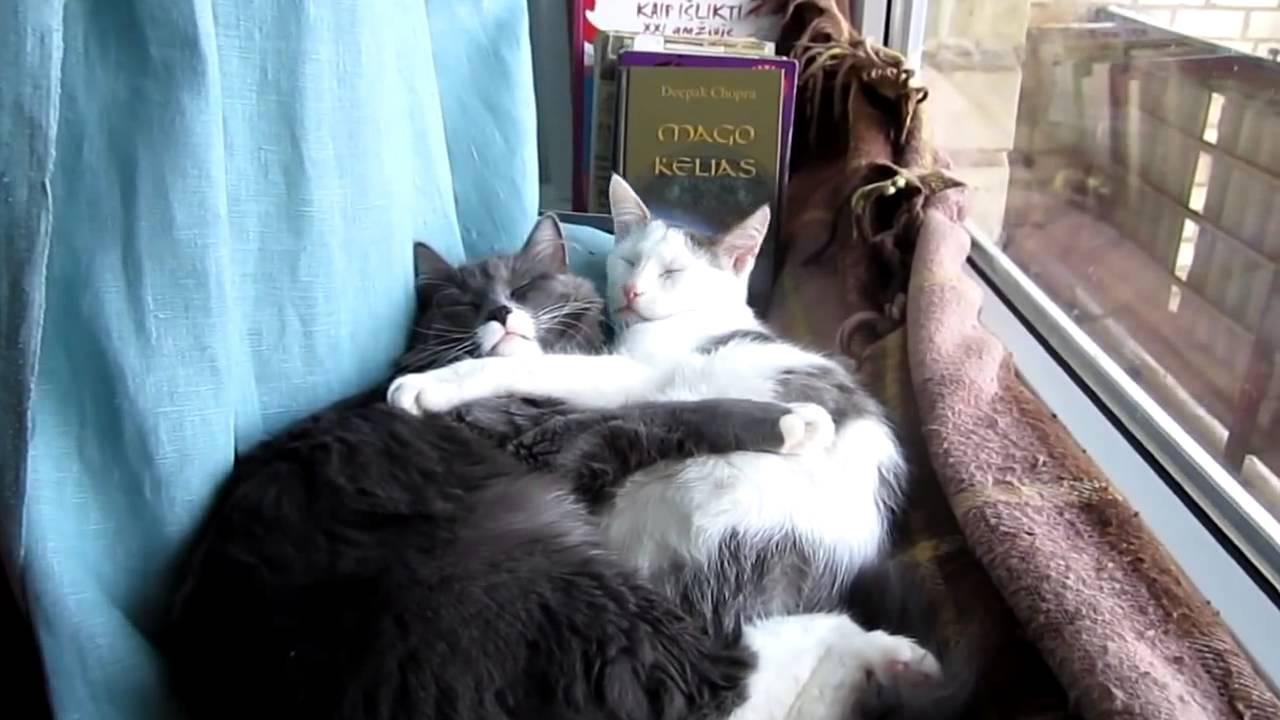 Welt Der Katzen