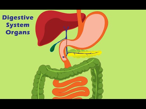 Learn Nutrition: Digestive System Organs