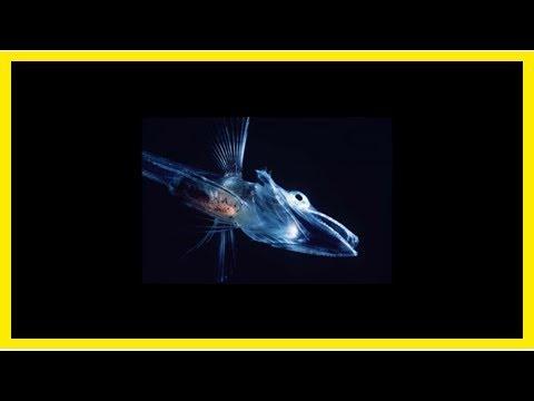 Report sets new goals for u.s. antarctic program