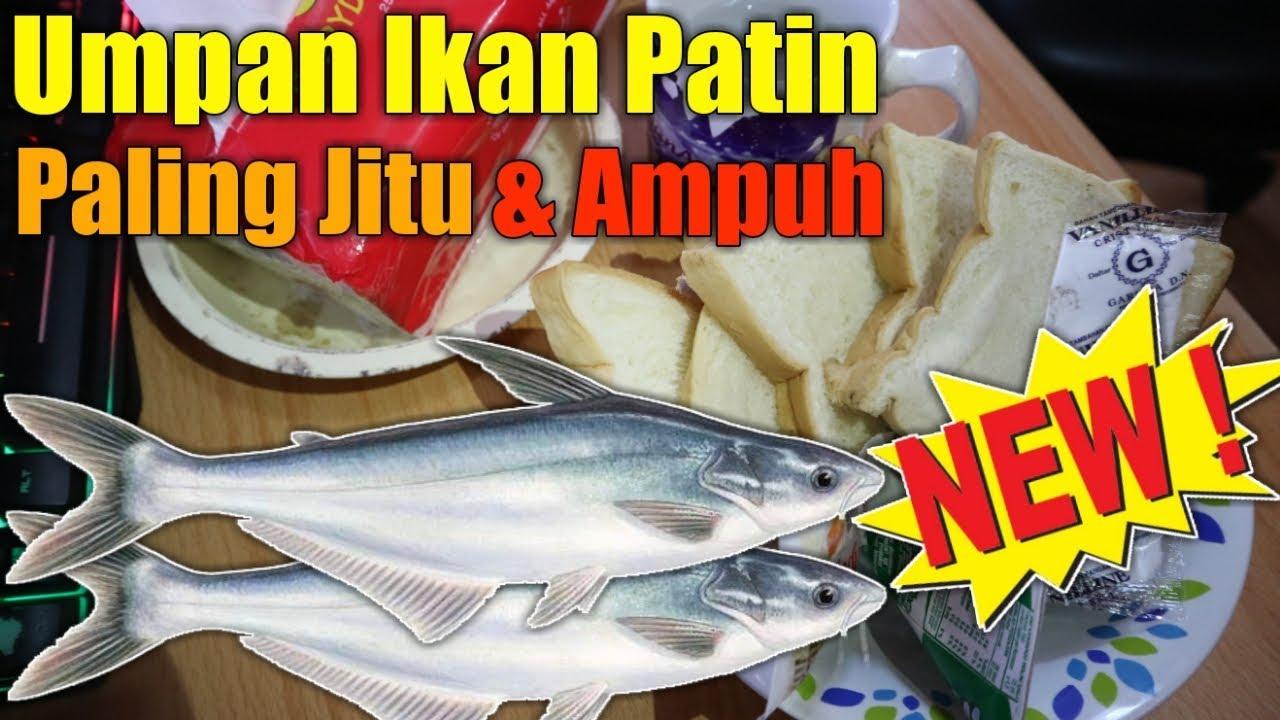 Umpan Ikan Patin Paling Jitu Dan Ampuh Untuk Galatama Juga Harian Youtube