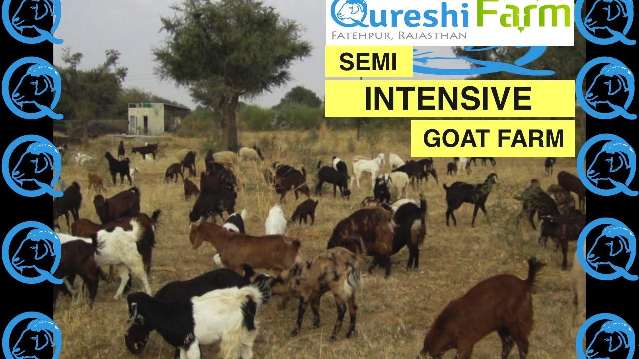 Semi-Intensive Goat Farm Tour