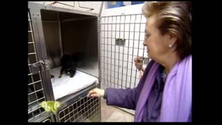 Ingestión de alfiler por un perro. Hospital Veterinario Cruz Cubierta en Guamipi (RTVV)