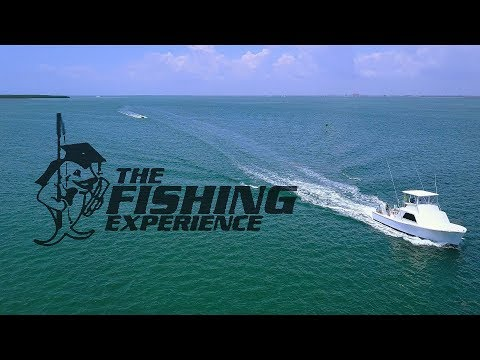Lisa L Sportfishing Charters - Capt. Mike Puller - The Fishing Experience