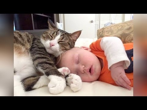 SLEEPY CATS, DOGS and BABIES are so FUNNY! - LAUGHING guaranteed, must watch!