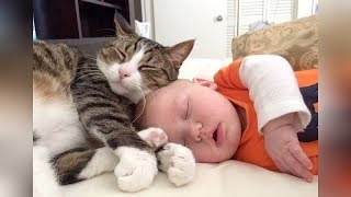 The FUNNIEST and CUTEST videos you'll see today! - Super CUTE BABIES sleeping with CATS & D