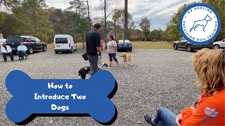 Leash Master: How to Introduce Two Dogs