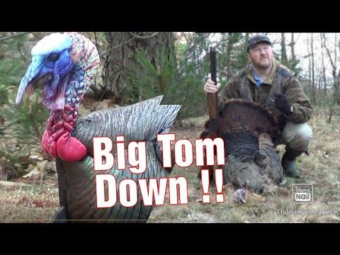 Michigan Turkey Hunt 2017 - Big Tom Down !