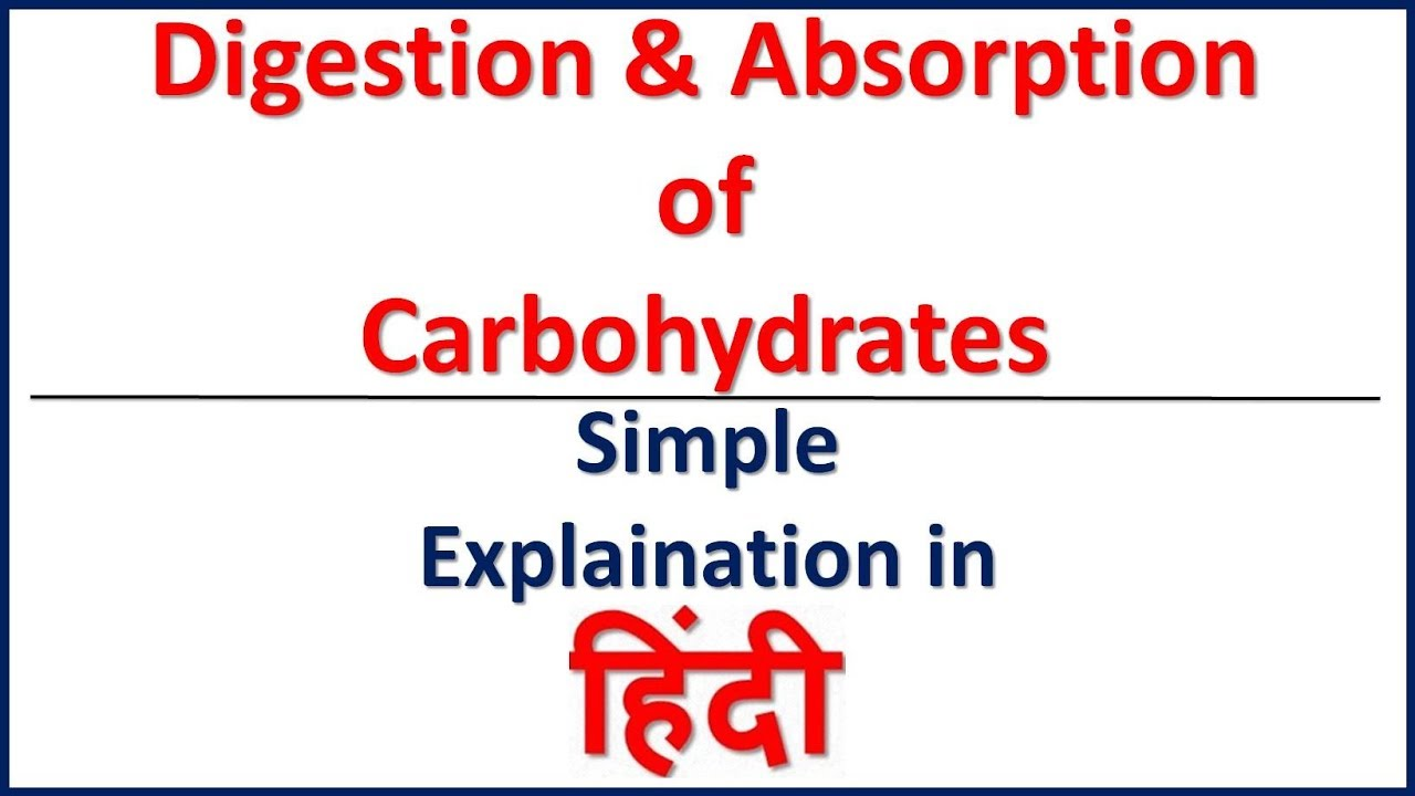 where are carbohydrates digested and absorbed