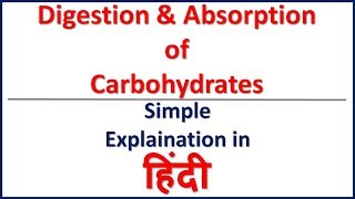 Digestion and absorption of Carbohydrates in HIndi | Bhushan Science