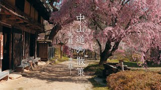 【中山道の桜】馬籠から妻籠への道のり :【Samurai Trail】Walking the Nakasendo from Magome to Tsumago(Gifu-Nagano, Japan)