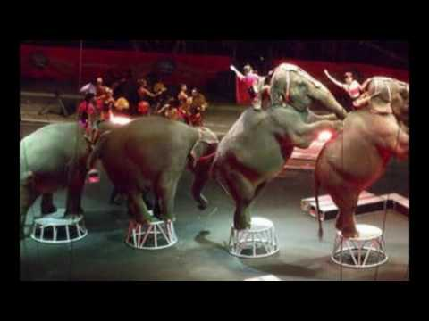 VICTORY! GUATEMALA BANS THE USE OF WILD ANIMALS IN CIRCUSES!