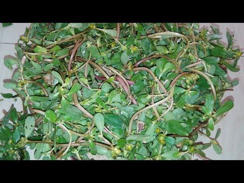 Loni ki tasty sabji || Kulfa ki sabji. Purslane leaves.