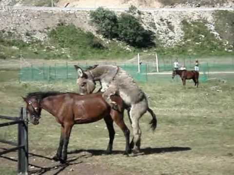 Horse and Pig from YouTube · Duration:  41 seconds