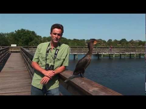Birding in The Palm Beaches