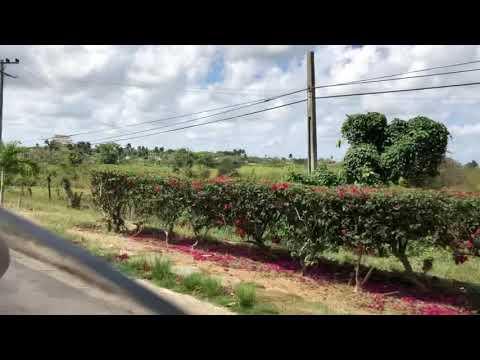 Video de Guane