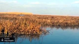 рыбалка на нижней волге видео смотреть